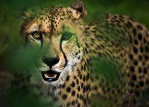 Naturdokus: Ein Blick hinter die Kulissen