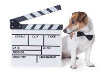 Der Filmpreis für Hunde: Palm Dog Award