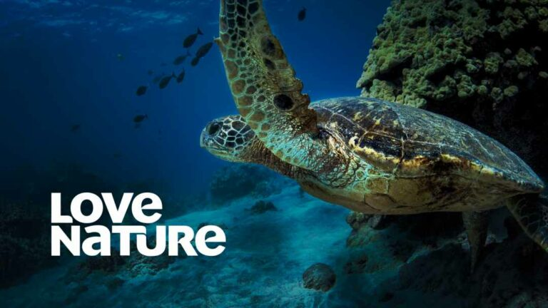 World Oceans Day: Doku-Marathon bei Love Nature am 8. Juni